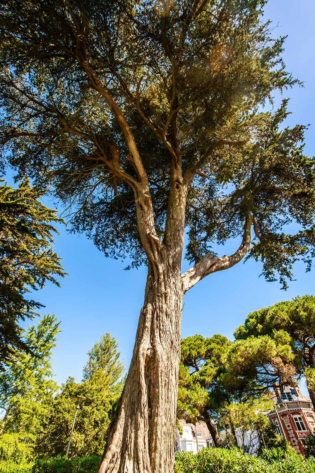 Abaca Elagage Saint Nazaire
