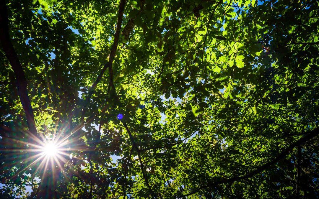 Diagnostic de l'état de santé des arbres