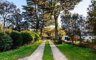 De Jolis Pins pour vos jardins urbains